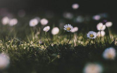 3 Bunga Cantik untuk Taman