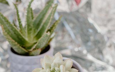 Cara Merawat Bunga Dalam Vas